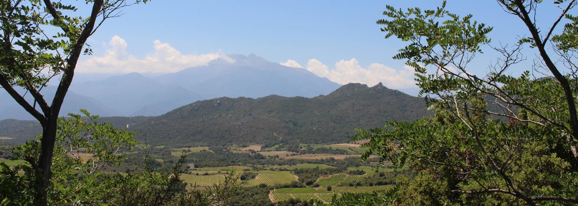 Vue du Canigou depuis la D13 au dessus de Tarerach