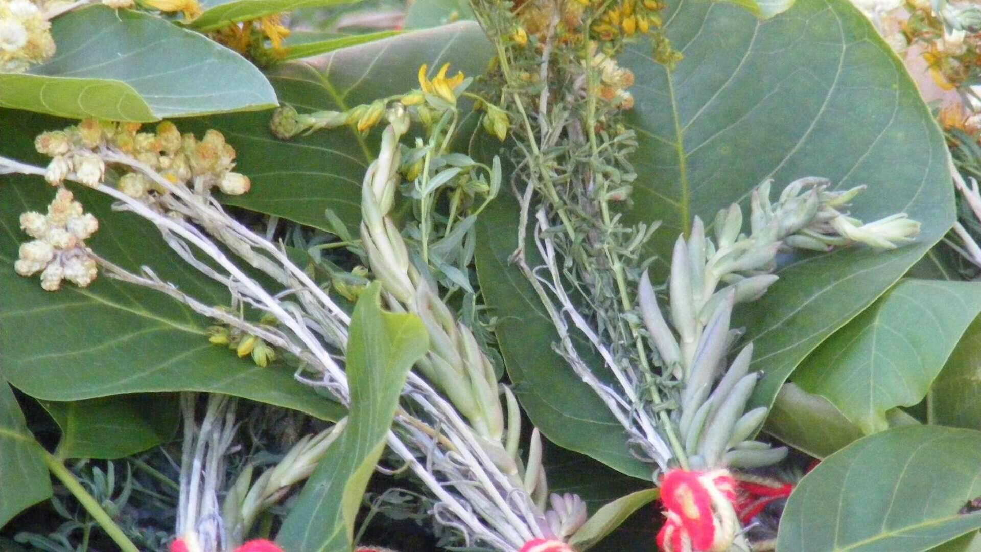 bouquets des herbes de la Saint Jean