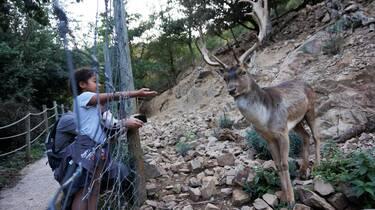 Le parc animalier de Casteil